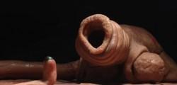 The Worm O